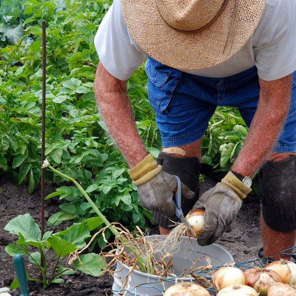 Harvesting and preserving the garden planet natural for Harvest organic soil