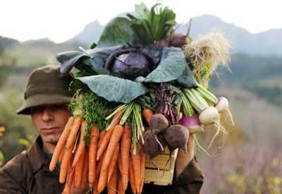 Vegetable Harvest And Storage Vegetable Gardening Guru