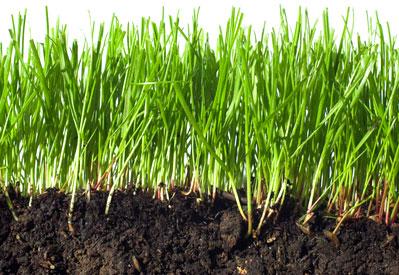 Healthy Soil