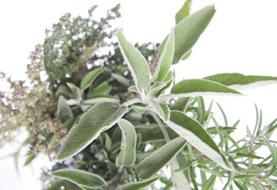 History of Herbs
