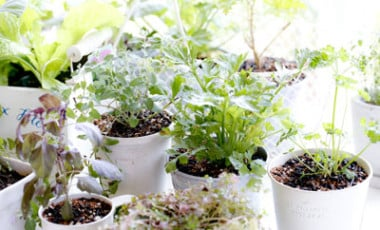 Indoor Gardening Tips Ideas Techniques Planet Natural