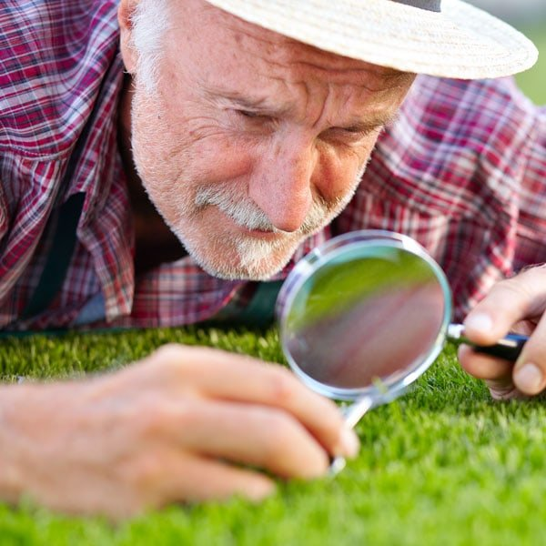 organic lawn care 101 maintaining a chemical free lawn planetlawn care guru
