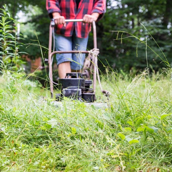 South Central Gardening Landscaping Ideas You Can Use: Bad Grasses In Lawns