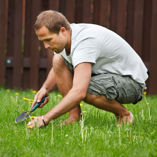 How To Repair Your Lawn Planet Natural