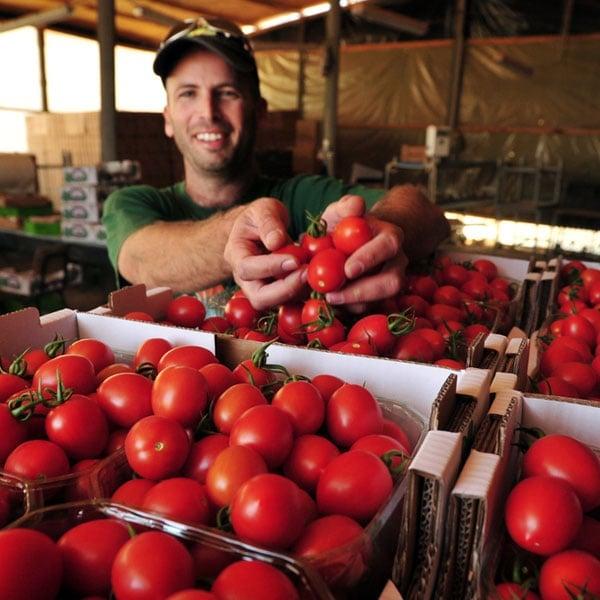 Tomato Gardener
