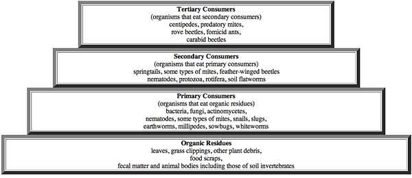 Compost Organisms