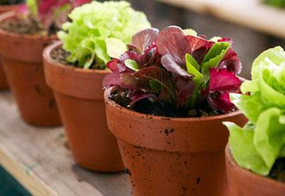 Growing Vegetables In Containers Vegetable Gardening Guru