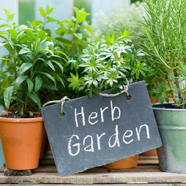 Starting an Herb Garden Planet Natural