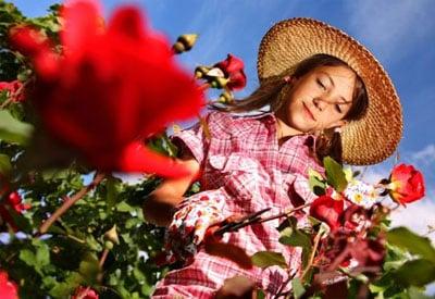 Propagating Roses