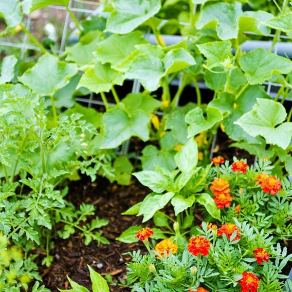How to Plan a Vegetable Garden | Planet Natural
