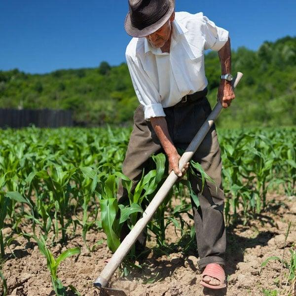 Seasoned Gardener