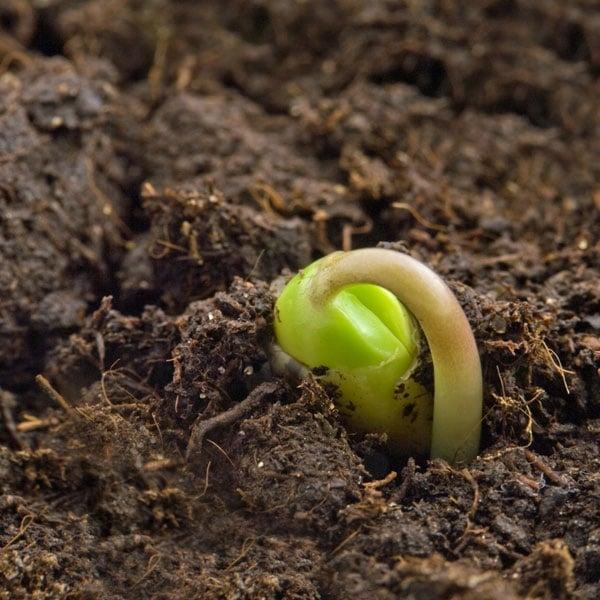 Compost & Dirt