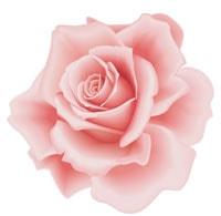 Rose Gardening Supplies