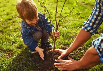 Last Call For Planting Fruit Trees
