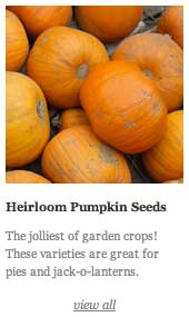 Heirloom Pumpkin Seeds