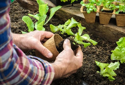 How to Start an Organic Garden Planet Natural