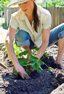Spirit Gardening