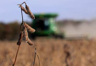 GMO Crop Harverst