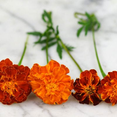 Marigold Brocade Mix