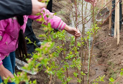 Planting Bare Root Trees