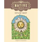 cutleaf-daisy-pack