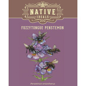 fuzzytongue-penstemon-pack