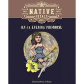 hairy-evening-primrose-pack