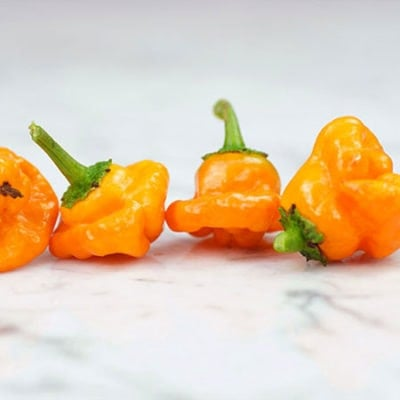 Scotch Bonnet Pepper