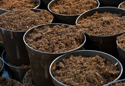 Peat Moss vs Coco Coir | Planet Natural