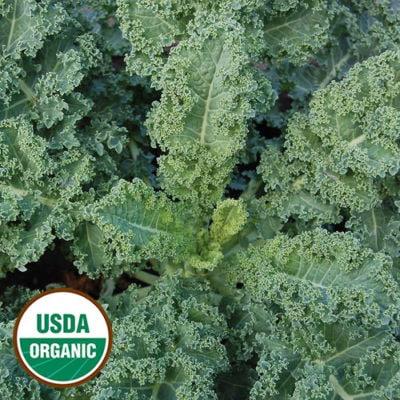 Dwarf Blue Curled Kale