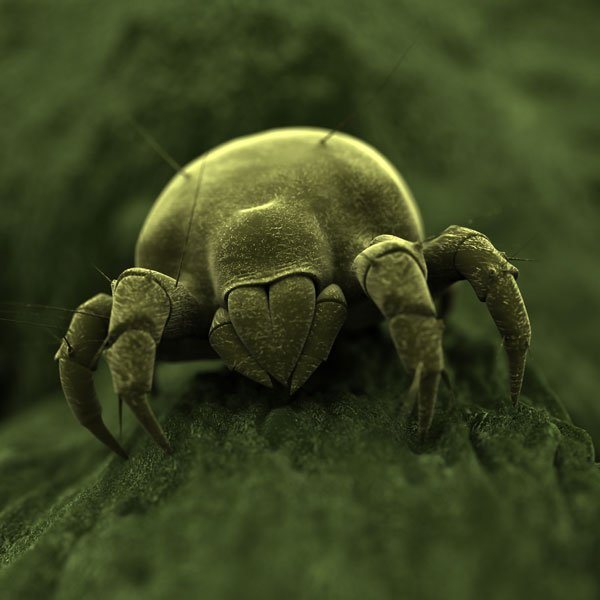How to Get Rid of Russet Mites | Planet Natural