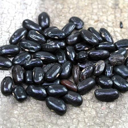 Bean, Trail of Tears