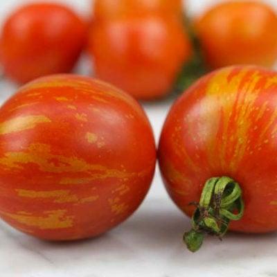 Csikos Botermo Tomato