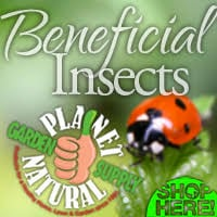 Beneficial Insects for Sale