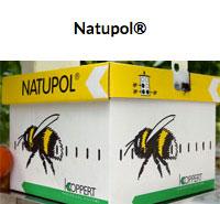 Minipol Garden Hive