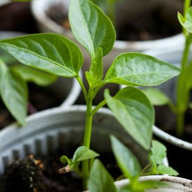 How to Prepare Garden Soil for Planting | Planet Natural