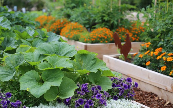 Beginner Raised Bed Gardening Guide | Planet Natural