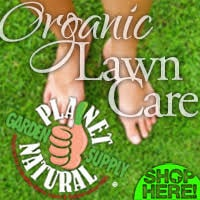 Organic Lawn Care 101 - Maintaining a Chemical-Free Lawn
