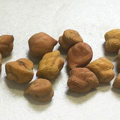 Golden Garbanzo Bean