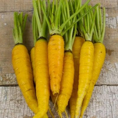Carrot, Amarillo 1