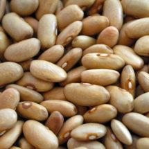 Bean, Arikara Yellow 1