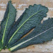Cabbage, Nero Di Toscana 1