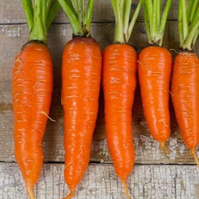 Carrot, Kuroda 1