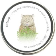 Organic Catnip 1