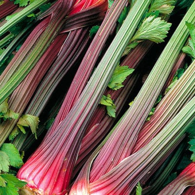Celery, Giant Red Re-Selection 1