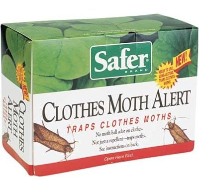 Clothes Moth Alert 1
