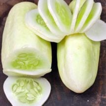 Cucumber, Miniature White 1