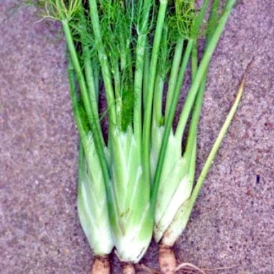 Fennel (Baker Creek) 1