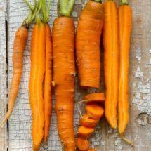 Carrot, Little Finger 1