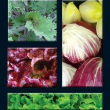 Mesclun Mix, European Salad 1